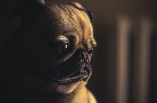 Španělská úsloví se psy